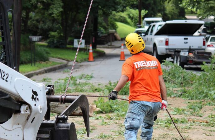 Arborist Consultations-Fort Collins Tree Trimming and Stump Grinding Services-We Offer Tree Trimming Services, Tree Removal, Tree Pruning, Tree Cutting, Residential and Commercial Tree Trimming Services, Storm Damage, Emergency Tree Removal, Land Clearing, Tree Companies, Tree Care Service, Stump Grinding, and we're the Best Tree Trimming Company Near You Guaranteed!