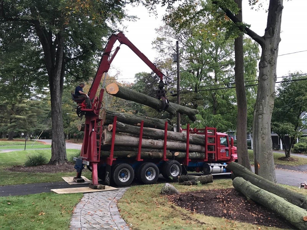 Commercial Tree Services-Fort Collins Tree Trimming and Stump Grinding Services-We Offer Tree Trimming Services, Tree Removal, Tree Pruning, Tree Cutting, Residential and Commercial Tree Trimming Services, Storm Damage, Emergency Tree Removal, Land Clearing, Tree Companies, Tree Care Service, Stump Grinding, and we're the Best Tree Trimming Company Near You Guaranteed!