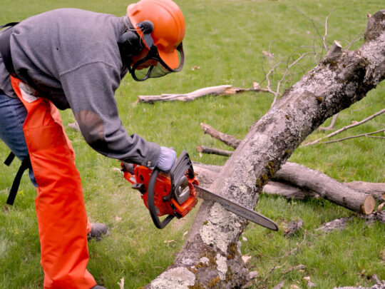 Emergency Tree Removal-Fort Collins Tree Trimming and Stump Grinding Services-We Offer Tree Trimming Services, Tree Removal, Tree Pruning, Tree Cutting, Residential and Commercial Tree Trimming Services, Storm Damage, Emergency Tree Removal, Land Clearing, Tree Companies, Tree Care Service, Stump Grinding, and we're the Best Tree Trimming Company Near You Guaranteed!