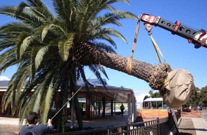 Palm Tree Removal-Fort Collins Tree Trimming and Stump Grinding Services-We Offer Tree Trimming Services, Tree Removal, Tree Pruning, Tree Cutting, Residential and Commercial Tree Trimming Services, Storm Damage, Emergency Tree Removal, Land Clearing, Tree Companies, Tree Care Service, Stump Grinding, and we're the Best Tree Trimming Company Near You Guaranteed!