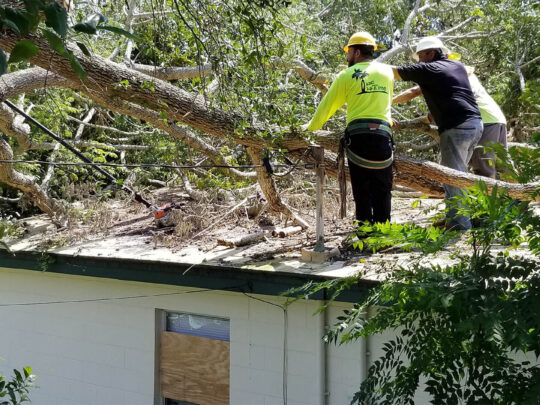 Storm Damage-Fort Collins Tree Trimming and Stump Grinding Services-We Offer Tree Trimming Services, Tree Removal, Tree Pruning, Tree Cutting, Residential and Commercial Tree Trimming Services, Storm Damage, Emergency Tree Removal, Land Clearing, Tree Companies, Tree Care Service, Stump Grinding, and we're the Best Tree Trimming Company Near You Guaranteed!