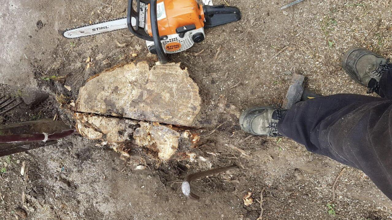 Stump Removal-Fort Collins Tree Trimming and Stump Grinding Services-We Offer Tree Trimming Services, Tree Removal, Tree Pruning, Tree Cutting, Residential and Commercial Tree Trimming Services, Storm Damage, Emergency Tree Removal, Land Clearing, Tree Companies, Tree Care Service, Stump Grinding, and we're the Best Tree Trimming Company Near You Guaranteed!