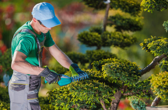 Tree Pruning-Fort Collins Tree Trimming and Stump Grinding Services-We Offer Tree Trimming Services, Tree Removal, Tree Pruning, Tree Cutting, Residential and Commercial Tree Trimming Services, Storm Damage, Emergency Tree Removal, Land Clearing, Tree Companies, Tree Care Service, Stump Grinding, and we're the Best Tree Trimming Company Near You Guaranteed!