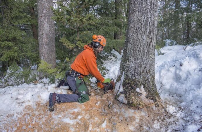 Tree Removal-Fort Collins Tree Trimming and Stump Grinding Services-We Offer Tree Trimming Services, Tree Removal, Tree Pruning, Tree Cutting, Residential and Commercial Tree Trimming Services, Storm Damage, Emergency Tree Removal, Land Clearing, Tree Companies, Tree Care Service, Stump Grinding, and we're the Best Tree Trimming Company Near You Guaranteed!