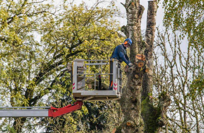 Tree Trimming-Fort Collins Tree Trimming and Stump Grinding Services-We Offer Tree Trimming Services, Tree Removal, Tree Pruning, Tree Cutting, Residential and Commercial Tree Trimming Services, Storm Damage, Emergency Tree Removal, Land Clearing, Tree Companies, Tree Care Service, Stump Grinding, and we're the Best Tree Trimming Company Near You Guaranteed!