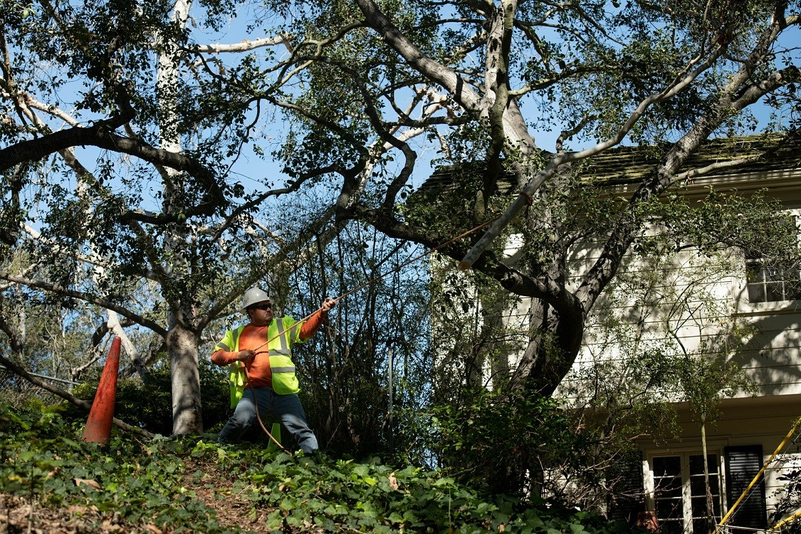 Arrowhead-Fort Collins Tree Trimming and Stump Grinding Services-We Offer Tree Trimming Services, Tree Removal, Tree Pruning, Tree Cutting, Residential and Commercial Tree Trimming Services, Storm Damage, Emergency Tree Removal, Land Clearing, Tree Companies, Tree Care Service, Stump Grinding, and we're the Best Tree Trimming Company Near You Guaranteed!