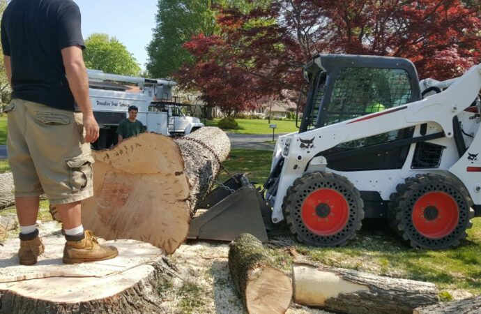 Loveland-Fort Collins Tree Trimming and Stump Grinding Services-We Offer Tree Trimming Services, Tree Removal, Tree Pruning, Tree Cutting, Residential and Commercial Tree Trimming Services, Storm Damage, Emergency Tree Removal, Land Clearing, Tree Companies, Tree Care Service, Stump Grinding, and we're the Best Tree Trimming Company Near You Guaranteed!