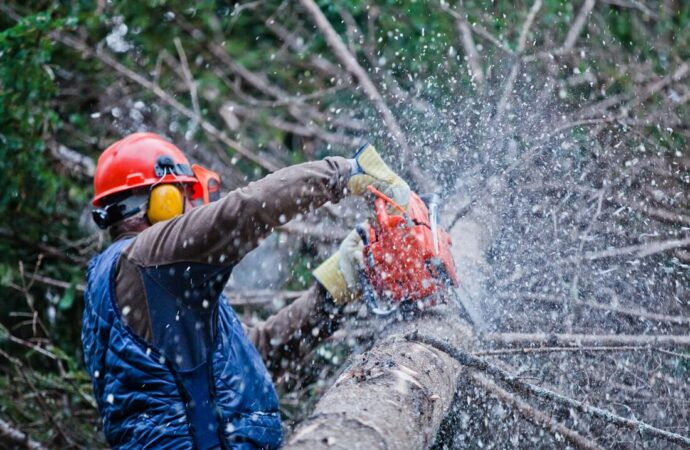 Wellington-Fort Collins Tree Trimming and Stump Grinding Services-We Offer Tree Trimming Services, Tree Removal, Tree Pruning, Tree Cutting, Residential and Commercial Tree Trimming Services, Storm Damage, Emergency Tree Removal, Land Clearing, Tree Companies, Tree Care Service, Stump Grinding, and we're the Best Tree Trimming Company Near You Guaranteed!